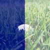 BALLFINDER Golf Ball Finder: Find Golf Balls via Your Camera!