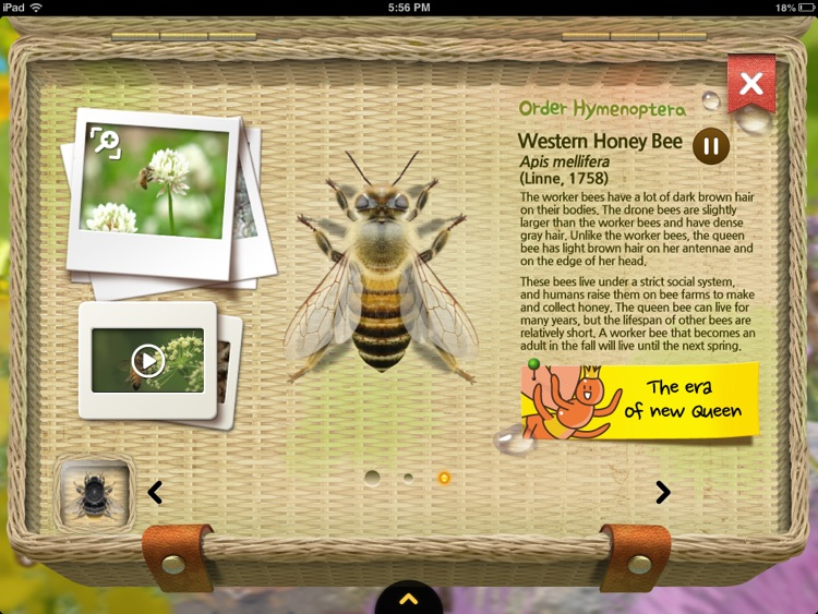 Meet the Insects: Water & Grass Edition