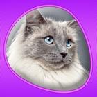Cats 360 icon