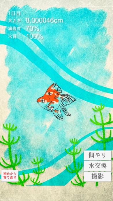 金魚育成アプリ-簡単なお世話でキンギョを育てる癒しのゲーム紹介画像2