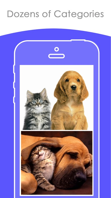 Free puppy & Kitten Wallpapers | Best HD Pictures