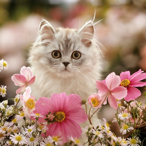 Persian Cats Wallpapers Hd Quotes Backgrounds By Whaleparadise Labs