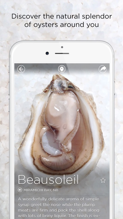 Oystour - Your Premier Guide to Learn and Know More About Oysters!