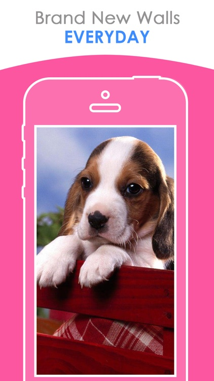 Cute Puppy Wallpapers | HD Backgrounds screenshot-3
