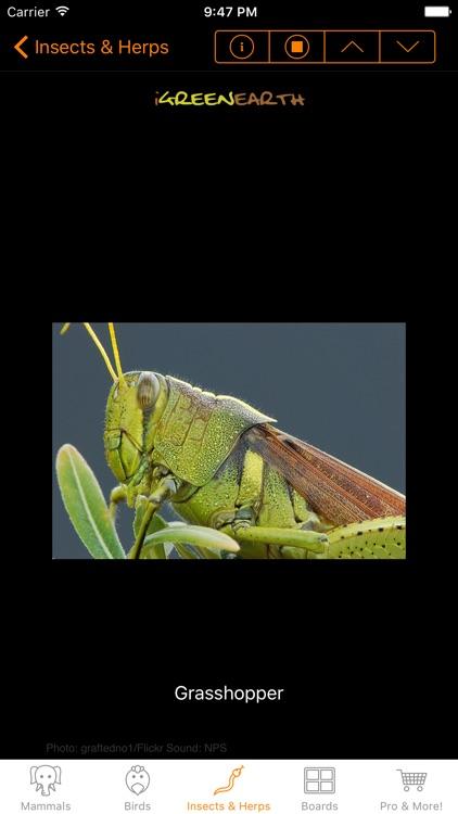 Animal Chatter Pro screenshot-3