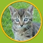子供のための刺激的な猫 - 広告なし icon