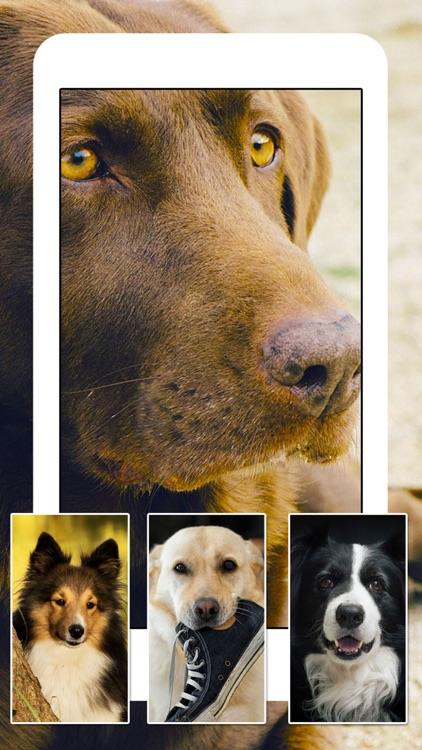 Dogs and Puppies - Dog Wallpapers, Cute Animal Backgrounds screenshot-2