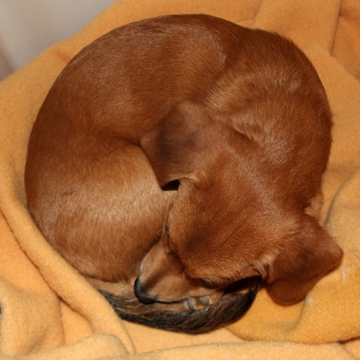 Puppy or Bagel