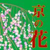 ぶらぶら京都 京都の花めぐり