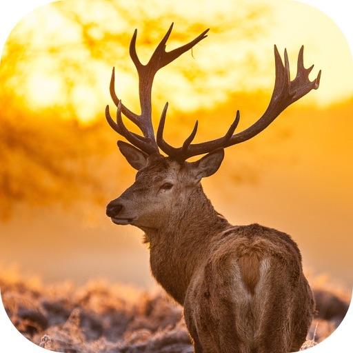 Whitetail Hunting Calls!