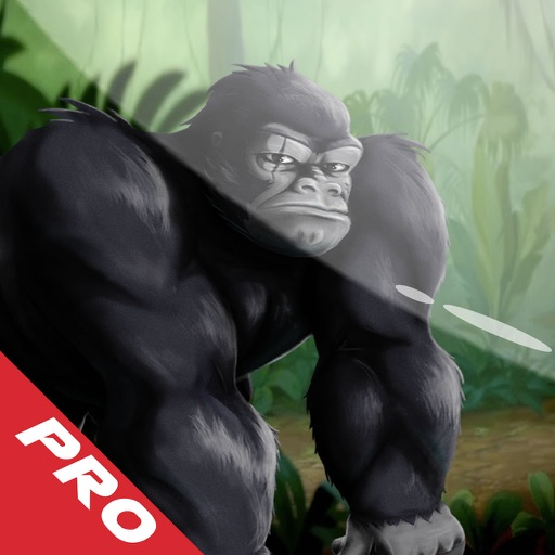 Gorillas Ruin City - The Fly Rope Adventure Pro