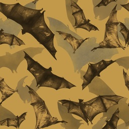 Bat and Bat Pattern Wallpapers HD: Quotes Backgrounds with Art Pictures