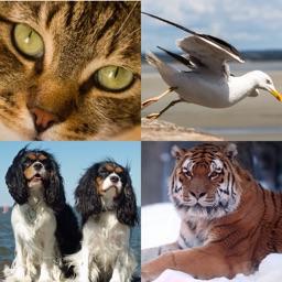 Tile2Play (Animals Edition)