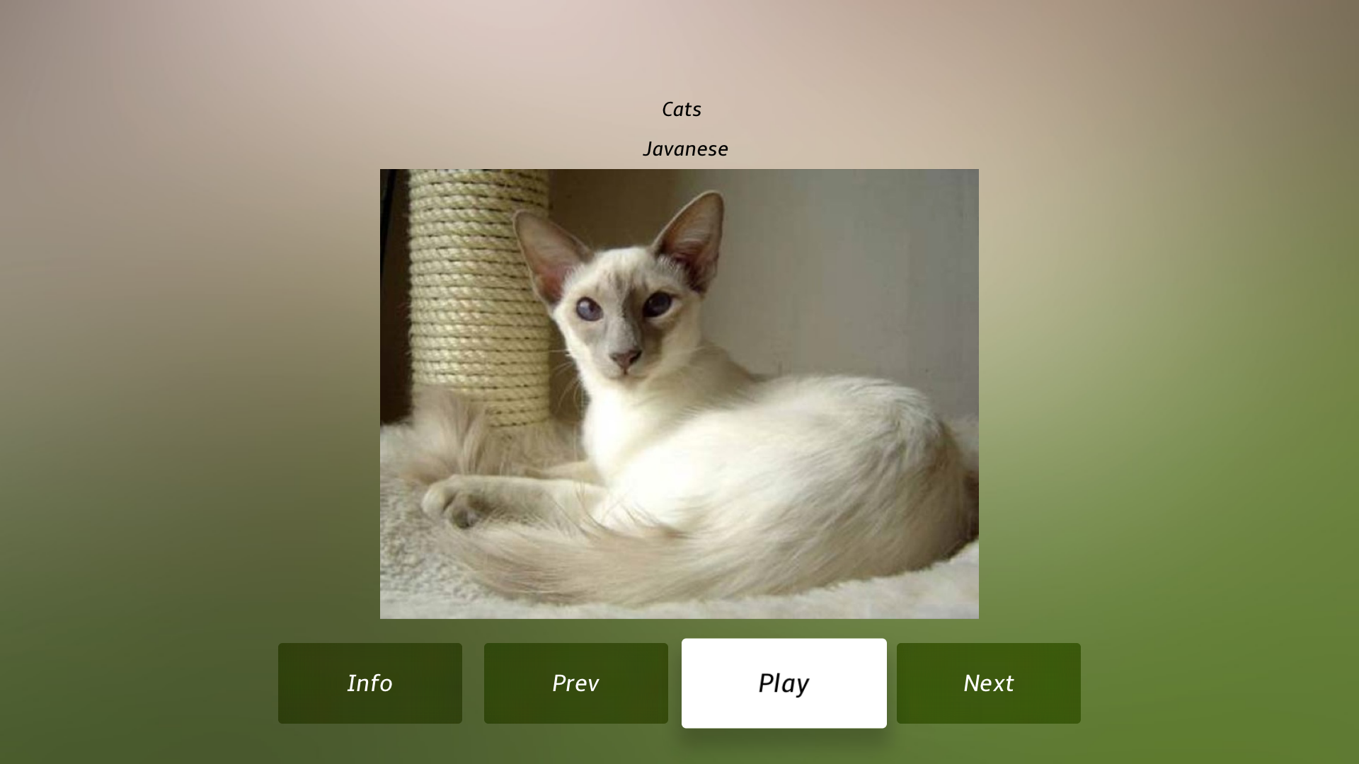 Cat Breeds Guide screenshot 19