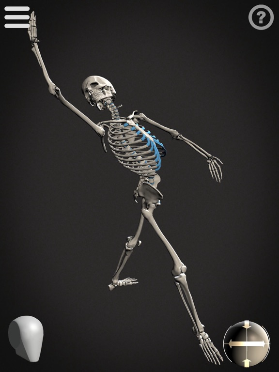 Skelly - Poseable Anatomy Model for Artistsのおすすめ画像3