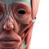 3D人体模型