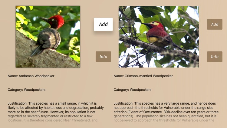 Woodpeckers Guide!
