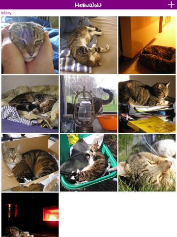 MeowWow - náhled