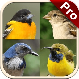 Perching Birds PRO: SMART guide to beautiful Singing Birds with Games & Puzzles