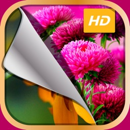 HD Flower Wallpaper.s – Beautiful Floral Themes and Custom Lock Sreen Background.s