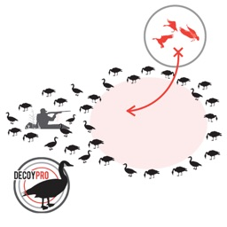 Goose Hunting Diagram Builder Canada Goose Hunting
