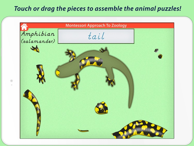 Parts Of Animals (Vertebrates) LITE - A Montessori Approach to Zoology HD screenshot-4