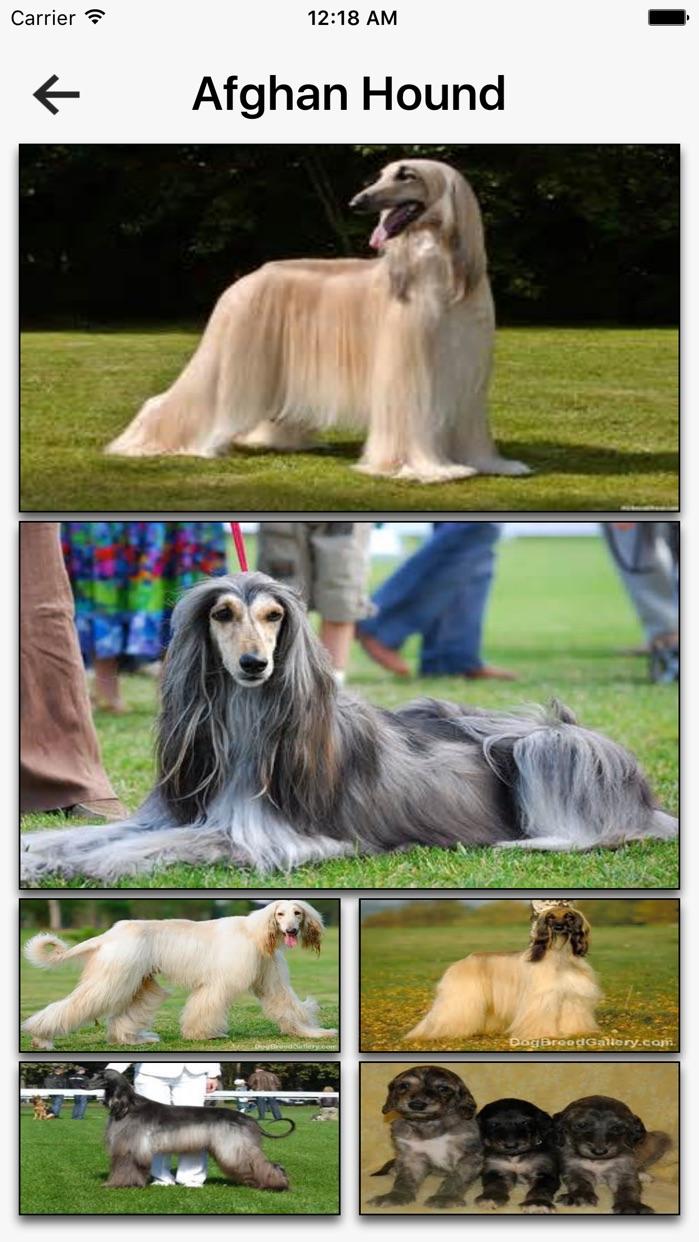 Dog Breeds HD Wallpapers Screenshot