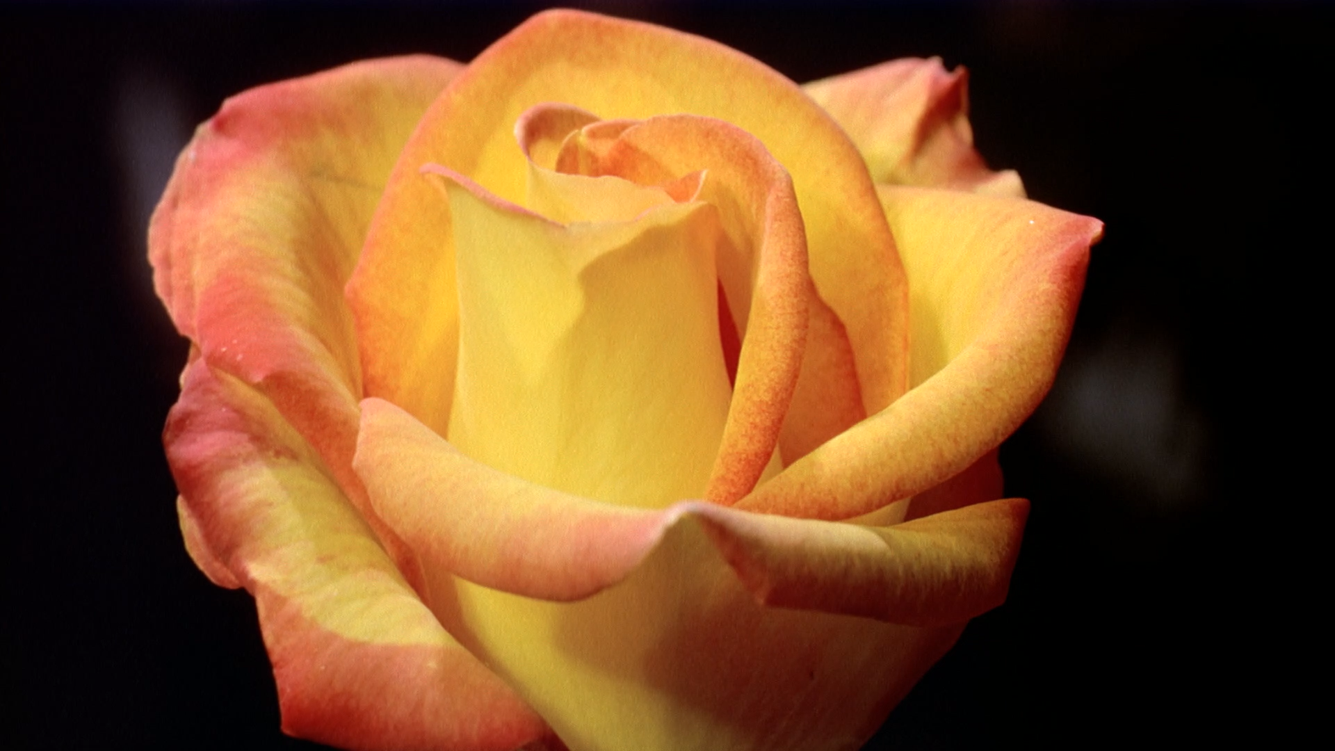 Magic Flowers TV screenshot 4