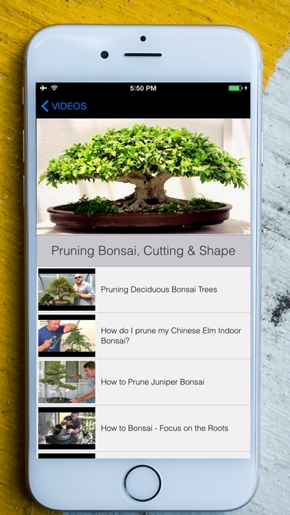 Easy Bonsai Tree For beginners - Best How To Grow Bonzai Plants Tips & Care Instruction UCC Videos, Start Today! screenshot-3