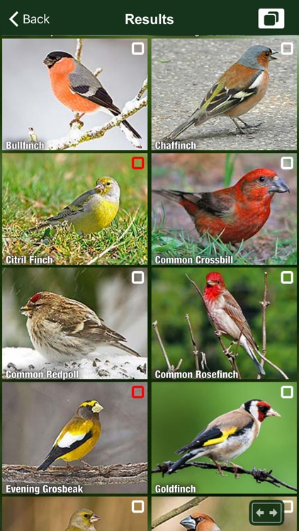 All Birds UK - A Complete Field Guide to the Official List of Bird Species Recorded in Great Britain and Northern Ireland screenshot-3