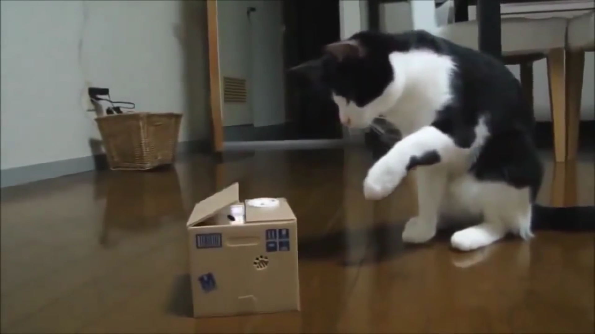 Infinite Cat Videos — Funny Internet Clips screenshot 3
