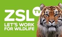 ZSL TV