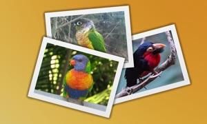 Bird Quiz - Guess The Pet Bird