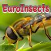 Insekten Europas