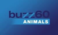 buzz60 Animals