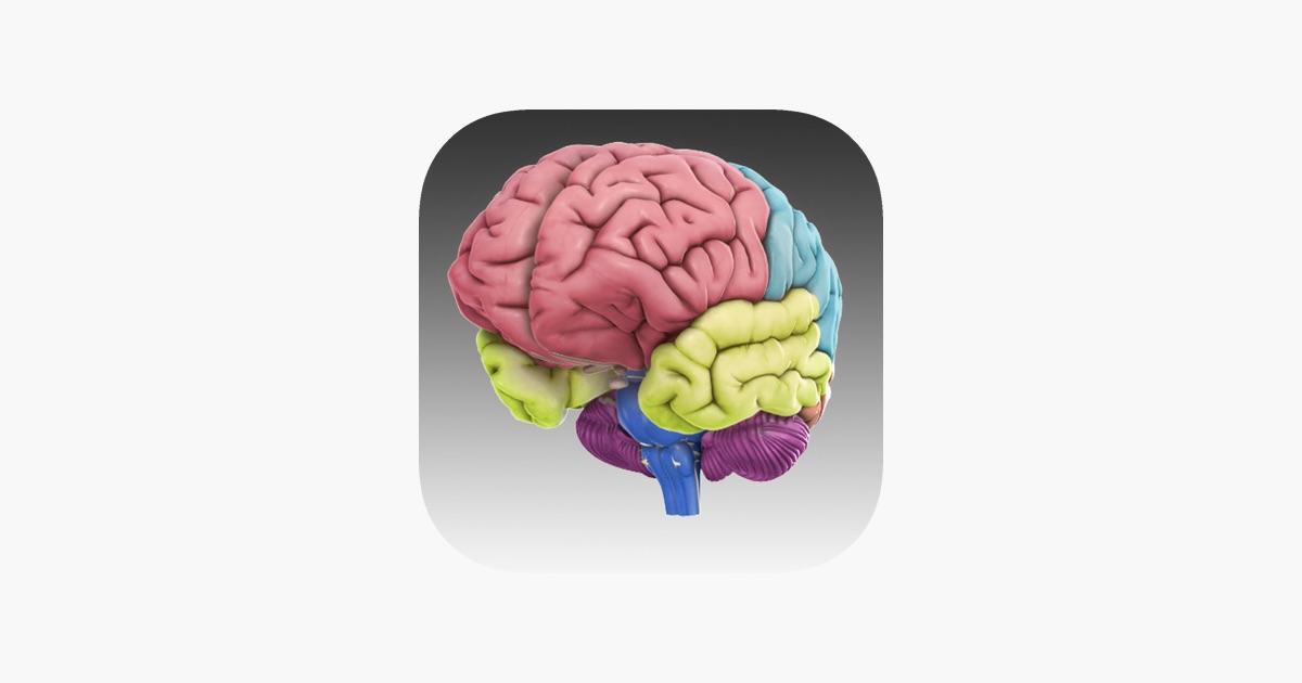 3D Brain im App Store