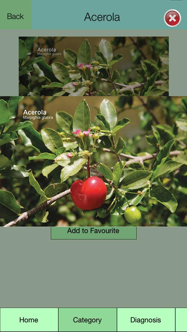 Edible Plant Guideのおすすめ画像4