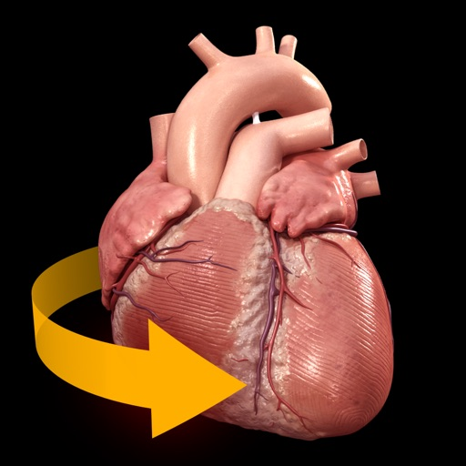 Heart - 3D Atlas of Anatomy