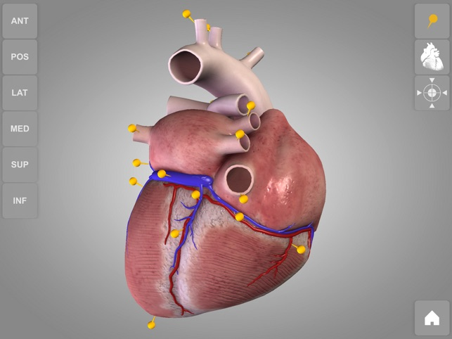 Heart - 3D Atlas of Anatomy on the App Store