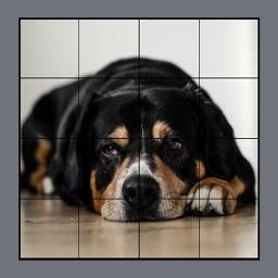 Dog Puzzles Extreme! 3