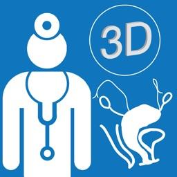 Anatomy for Pelvic Floor Surgery (3D)