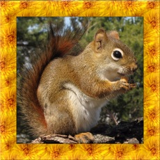 Activities of Squirrel Simulator 3D
