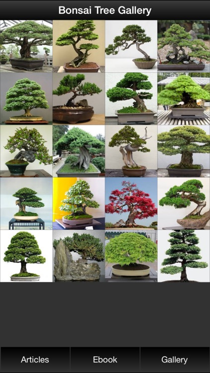 Bonsai Tree Guide - Everything You Need To Know Bonsai Tree ! screenshot-1