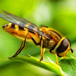 The Bees Encyclopedia