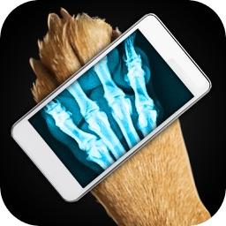 Simulator X-Ray Dog