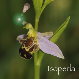 Orchid Id - The British Orchid Identification Guide