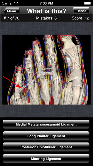Anatomy Foot Quiz review screenshots