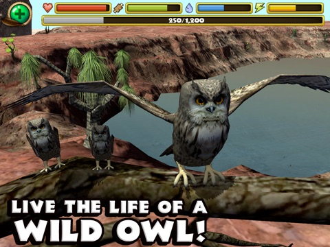 Owl Simulator на iPad