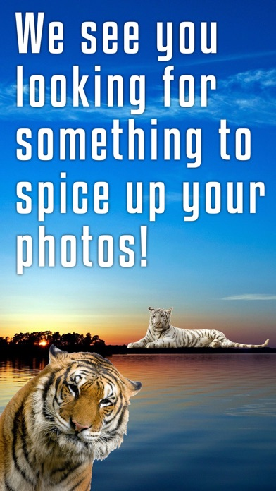 Sticky Cat - Free: Fun Stickers for pics screenshot two