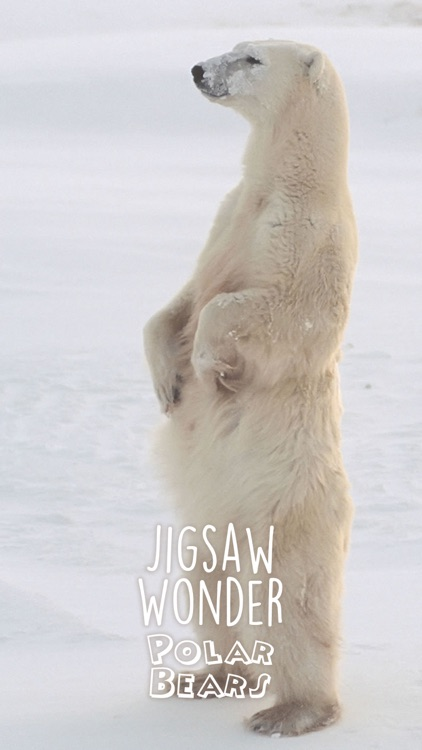 Jigsaw Wonder Polar Bears for Kids screenshot-4